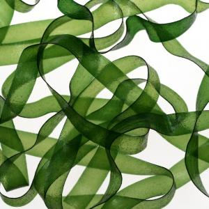Пленка SYBAI Body Stretch - Green [Зеленый]