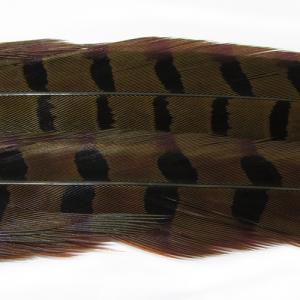 Перья фазана хвостовые WAPSI 1 Ringneck Pheasant Tail Pair - Olive [Оливковый]