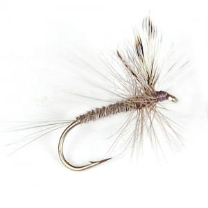 Mayfly Gray
